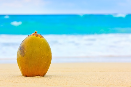 Coconut on the sand of a beautiful beach in Cuba Stock Photo
