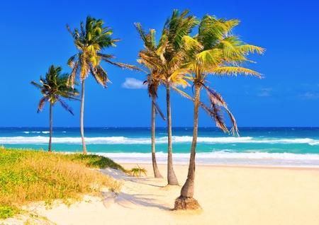 varadero: The cuban beach of Varadero on a beautiful summer day