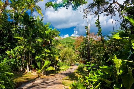 The garden at Soroa, a touristic and natural attraction in Cuba photo