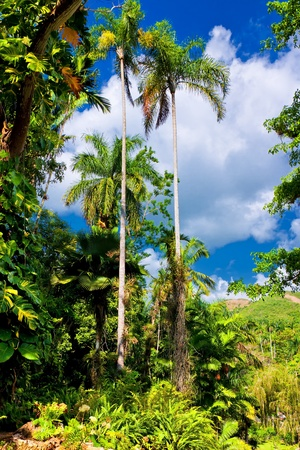 soroa: Tropical forest and distant mountains in the cuban countryside
