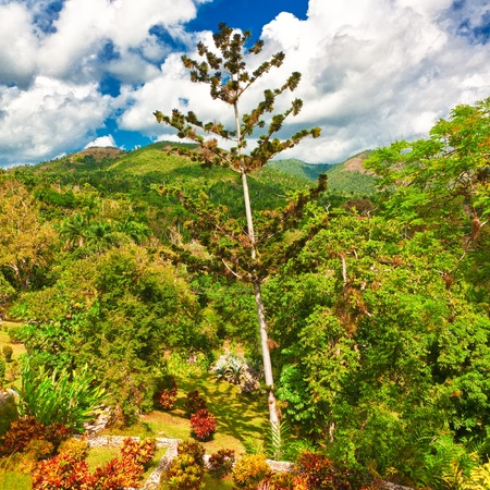The mountains in Pinar del Rio, Cuba, a view from the Soroa botanic garden Stock Photo - 13126600