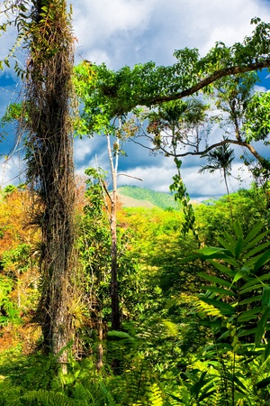 Tropical forest in Cuba with mountains in the distant background photo