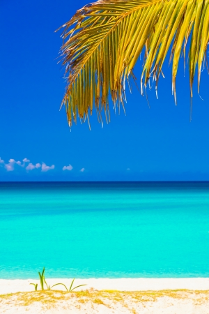 Palm leaf and the beautiful beach of Varadero in Cuba photo