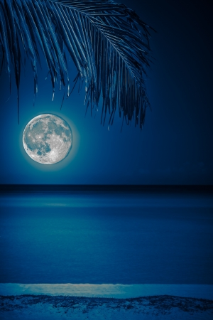Beach at night with a  full moon reflecting on the water and a coconut palm on the foreground toned in blue shades photo