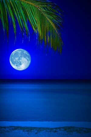 Tropical beach at night with a full moon reflecting on the water and a coconut palm on the foreground photo