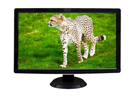 TV or computer monitor showing a wild cheetah on a green savanna   isolated on white  photo