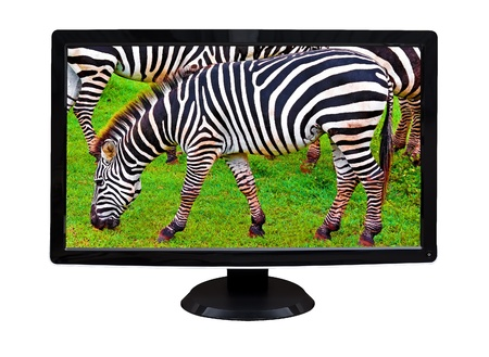 TV or computer monitor showing wild zebras grazing on a green grass field   isolated on white  photo