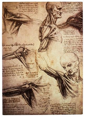 Oude tekeningen van de renaissance kunstenaar en wetenschapper Leonardo DaVinci bestuderen van het menselijk lichaam