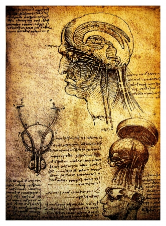 Ancient anatomical drawings made by Leonardo DaVinci, a study of the human brain and nervous system
