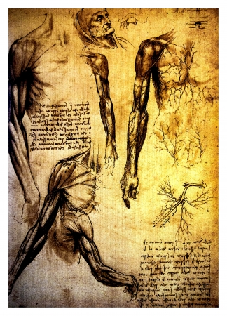 Ancient anatomical drawings made by Leonardo DaVinci, a study of the human muscles and circulatory system