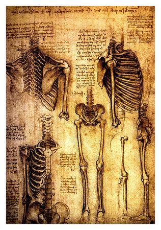 columna vertebral: Antiguos dibujos anatómicos realizados por Leonardo Da Vinci, un estudio de los huesos y las articulaciones humanas que muestran un esqueleto detallada