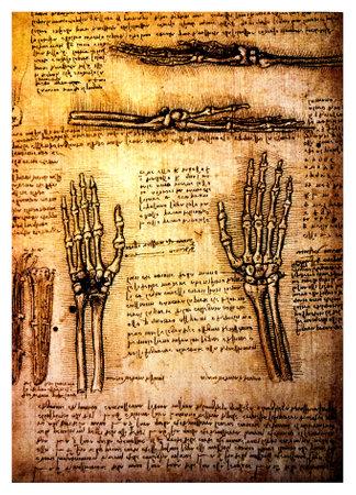 leonardo davinci: Ancient anatomical drawings made by Leonardo DaVinci, a study of the human body