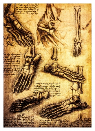Ancient anatomical drawings made by Leonardo DaVinci, a study of the human body