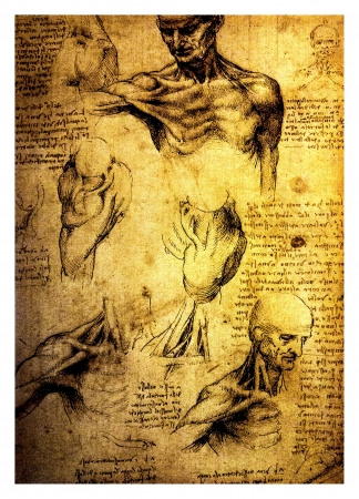 Ancient anatomical drawings made by Leonardo DaVinci, a study of the human body and its proportions