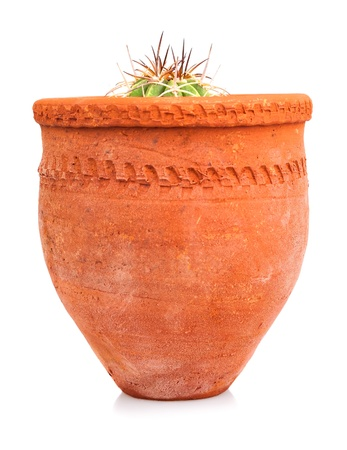 red clay: Small cactus planted on a red clay pot isolated on white