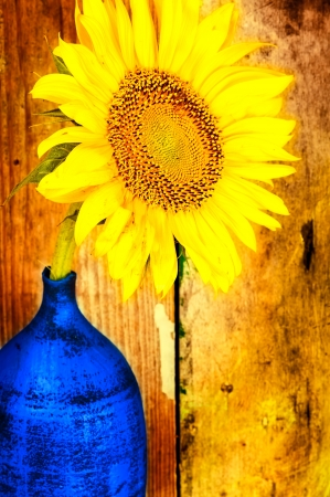 Bright yellow sunflower on a blue vase with an old woods background photo