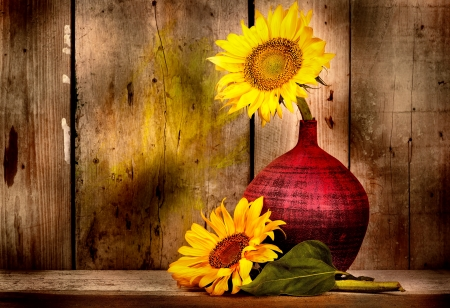 Beautiful sunflowers with and old weathered wood planks background photo