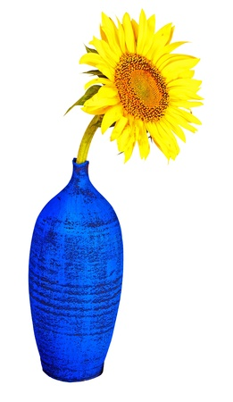 Colorful sunflower on a blue vase isolated on white with clipping path Stock Photo - 18280728