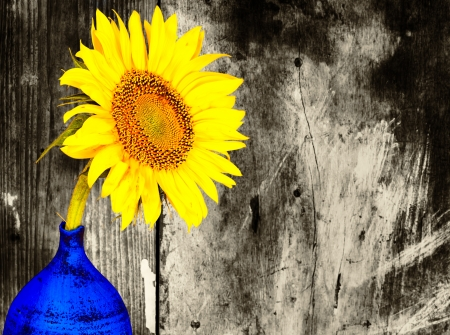 Colorful Sunflower On A Blue Vase With Black And White Grunge Background Stock Photo
