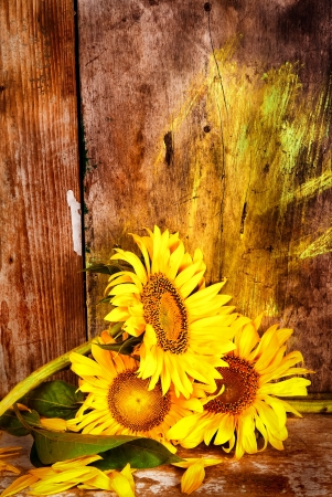 Sunflowers, leaves and yellow petals next to an old rustic wood planks background photo