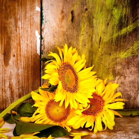 Sunflowers, leaves and yellow petals next to an old rustic wooden background photo