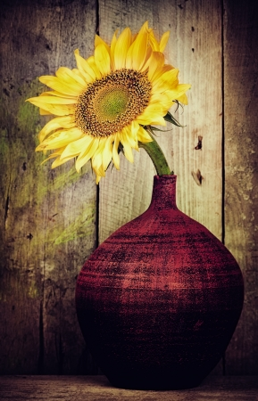 Vintage image of a single sunflower on a red vase with a rustic wood planks background photo