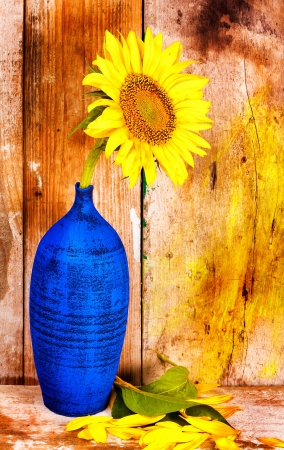 Sunflower on a blue vase with leaves and petals on the floor and  a grunge rustic wood planks  background photo