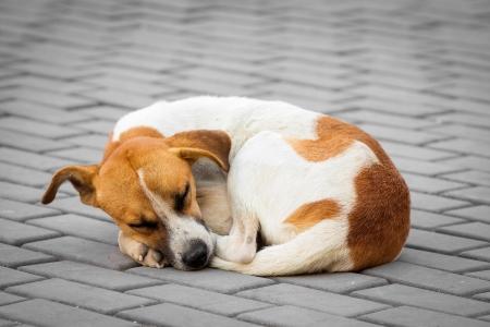 stray dog: Homeless abandoned dog sleeping on the street