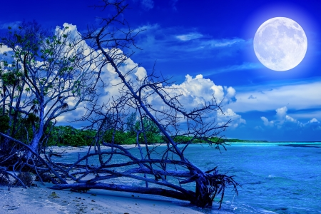 dead tree: Beach at night with a full moon creating reflections on the ocean and a dead tree trunk near the water Stock Photo