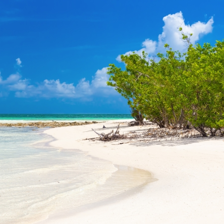 Virgin tropical beach with mangroves near the water in Coco Key, Cuba photo