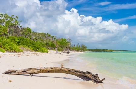 llave de sol: Virgen playa tropical en Cayo Coco Cayo Coco en Cuba, con tronco de árbol muerto en primer plano Foto de archivo