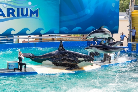 lolita:  Lolita,the killer whale at the Miami Seaquarium Founded in 1955,the oldest oceanarium in the United States,the facility receives over 500,000 visitors annually