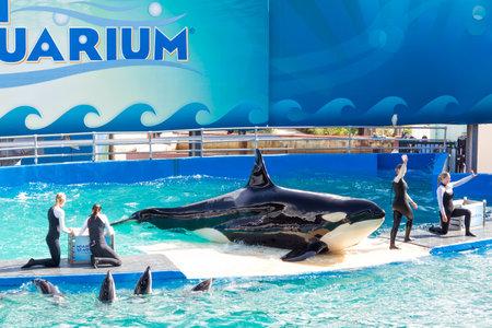 lolita: Lolita,the killer whale at the Miami Seaquarium