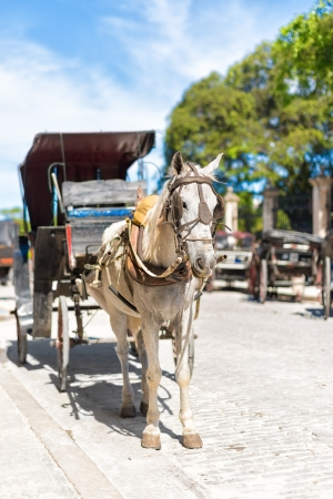 horse cart: Horse carriage waiting for tourists in Old Havana