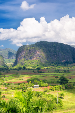 The Vinales valley in Cuba with a view of the mountains and puffy white  clouds on a blue sky photo