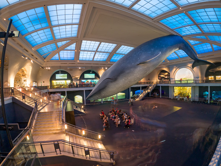 popular science: Marine life room at the American Museum of Natural History in New York