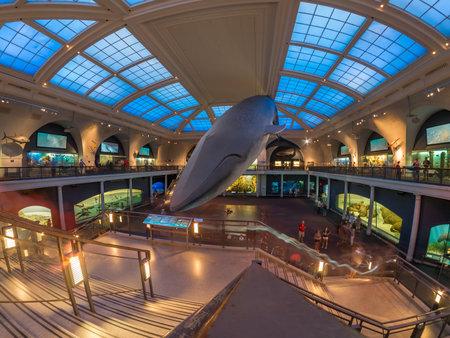 뉴욕 자연사 박물관의 해양 생물 방 에디토리얼