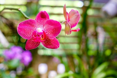 soroa: Beautiful orchid flower at the Soroa Orchid Botanical Garden in Cuba Stock Photo