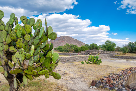patrimony: View of Teotihuacan, a major archaeological site in Mexico, with a nopal cactus on the foreground