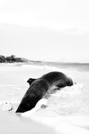 Artistic black and white image of a dead tree trunk on a deserted beach Фото со стока