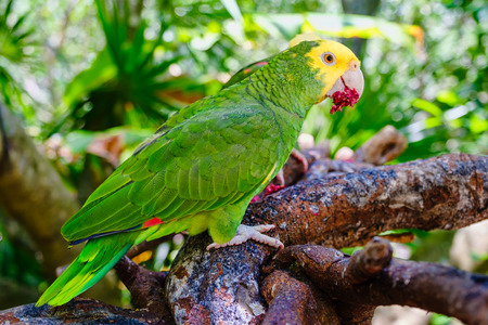 Yellow headed parrot perched on a tree branch Banque d'images - 123326491