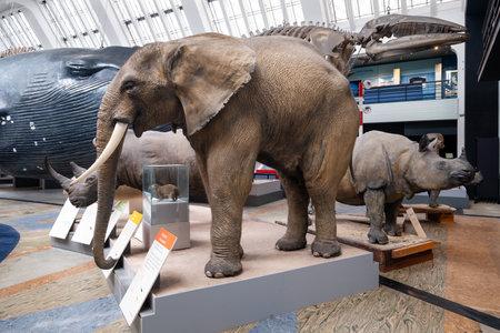 Die Mammals Gallery im Natural History Museum in London Editorial