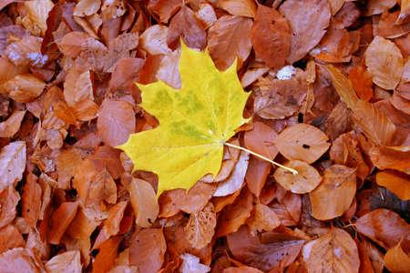 individualist: autumn individualist Stock Photo
