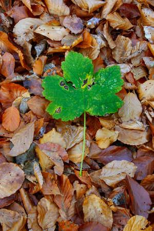 individualist: autumn individualist #2