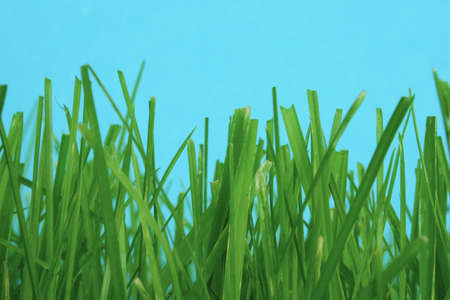 zoom earth: among the grass Stock Photo
