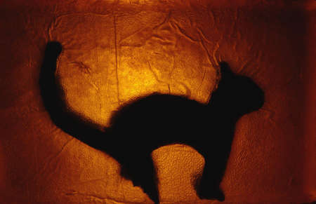 murk: cat - stained glass #2