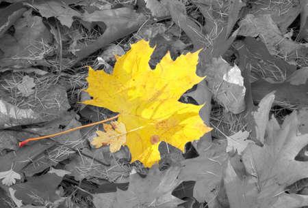 individualist: autumn individuality