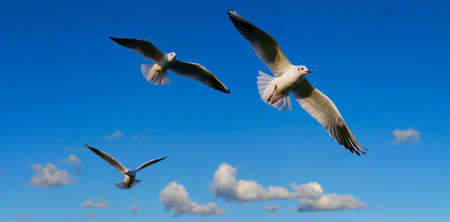 migrate: bright sky panorama  with seagulls - focus is set on the middle seagull