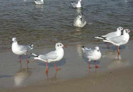 croud: seagulls