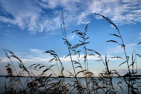 rushes: evening rushes